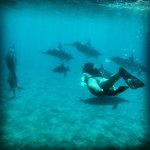  Swimming with dolphins in the wild at Manele Bay