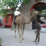  camel ride at haveli