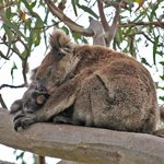 Exceptional Kangaroo Island