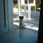  This little kitten always visited us
