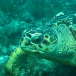  Wildlife on Molasses Reef