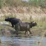 2 of 4 Rhinos we came across in one water hole.