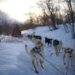 Dogsledding at the Abisko Mountain Lodge