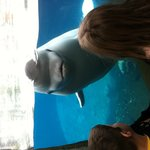  A very friendly beluga!