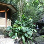  The rainforest spa