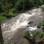 The babbling brook turned raging river after two days of rain!