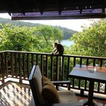 A cheeky monkey on our verandah