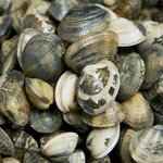  Fresh Vongole