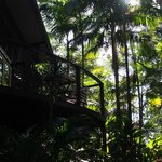 Looking up at our balcony from Forest floor - By Samuel M