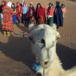 Group photoshoot but don't leave out your camel!
