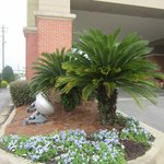 صورة فوتوغرافية لـ ‪Hampton Inn Pensacola Airport (Cordova Mall Area)‬