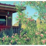  Sounds from this porch in the mornings?  Roosters and hummingbirds.