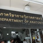 Department of anatomy