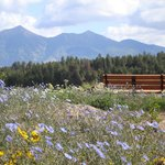 The Arboretum at Flagstaff