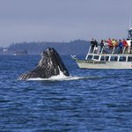 Jamie's Whaling Station and Adventure Centre - Ucluelet
