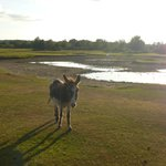 Donkey on the New Forest