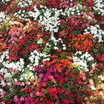  Refreshing Flowers at GAUTAM.  Colourful for whole day.