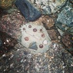 Really weird, this is in the rocks along with big circles circled with smaller rocks.