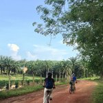 biking thru palm tree plantation