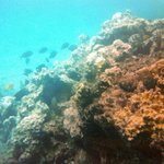  Coral reefs at Three Pools