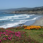  Sea Ranch wildflowers and ocean view