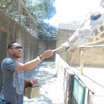 Feeding the giraffe!