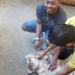 Playing with the tiger!