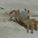  Small crabs