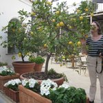lemon trees in the Canasta courtyard