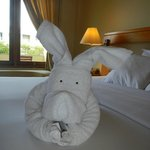 Towel Animals