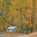  Arrowtown in Autumn