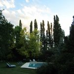 trees behind the pool