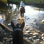 Horse riding at Camp Copark 20 mins away
