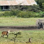  Elephants at waterhole in front of camp