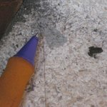 Tiny frog shown with pen nib so you can see how tiny it is! Hotel grounds.