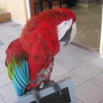  Gizmo, the resident parrot, aged 32