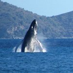  The view from Seascape VIlla when a humpback whale was breaching