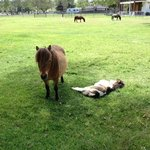  Mini &amp; foal