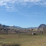  Authentic barns and corrals.