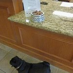  Pets are welcome at Candlewood Suites, Fort Stockton, Tx