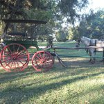  A Horse carriage in the grounds