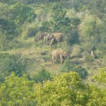 Elephants at 200 meters