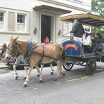 Horse & mule drawn tour carriage