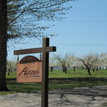 Alyson's Orchard