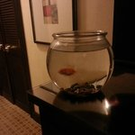  Goldfish available to keep you company in your room.