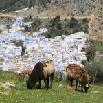  chefchaouen village in the background