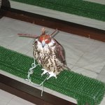  Falcon at Falcon Hospital