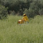 Daniela the beekeeper