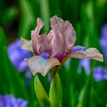 The iris garden has great macro shots