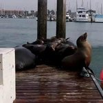 Sea Lions at the Harbor